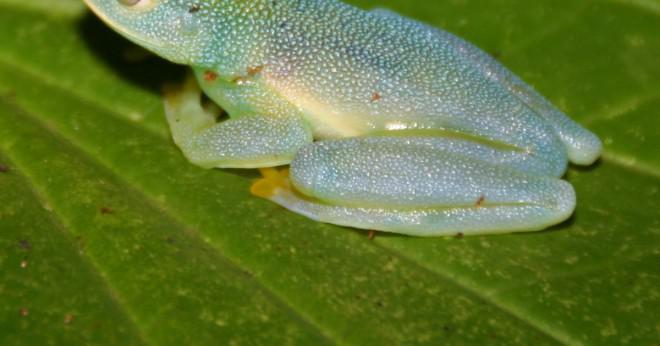 vad äter grodor för mat