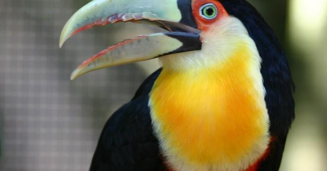 Vad är toucan skydd?