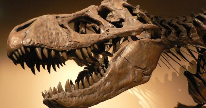 En sten som innehåller fossila snäckskal var mest sannolikt bildas som ett resultat av?