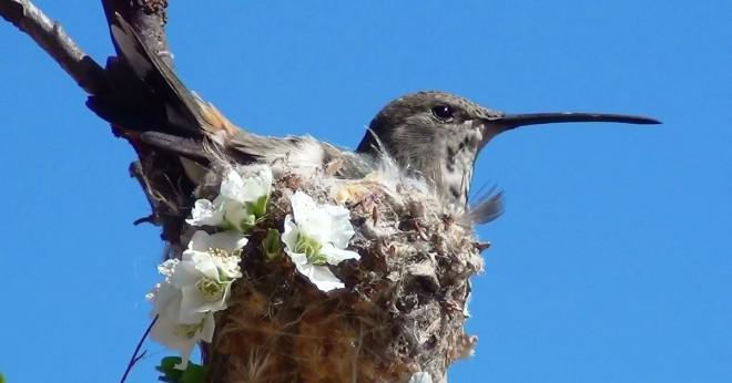 Vad väger mer en slant eller en kolibri?
