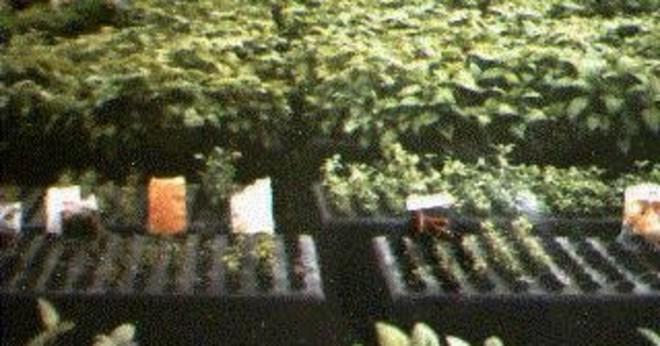 Varför frön nedsänkt i vatten inte gror?