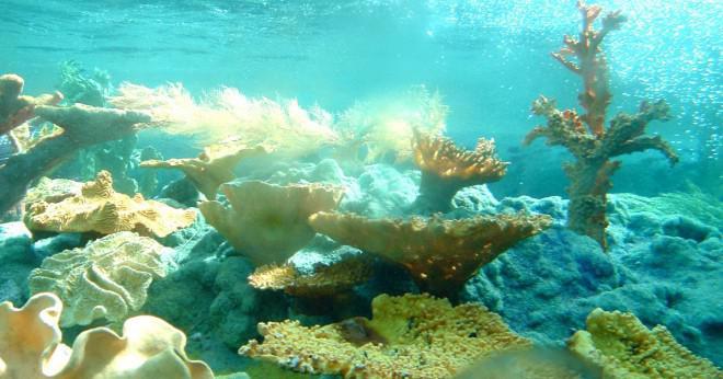 Hitta Nemo krossa och spruta