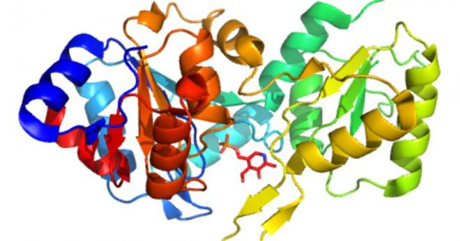 De olika former och funktioner för olika proteiner bestäms av?