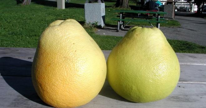 Har grapefrukt smak bitter eller söt?