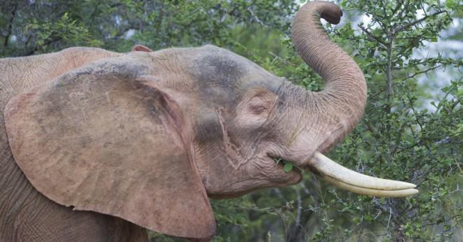 Utdrag från berg som vita elefanter illustrerar vilket element?