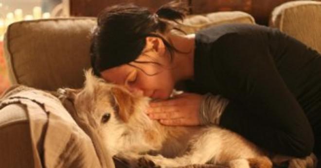 Finns det en organisation som skulle hjälpa till att hitta ett hem för en hund att lite ett barn som nått över det medan det sov?