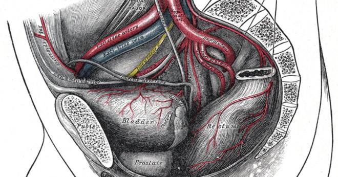 Kan infertilitet orsakad av prostatit botas?