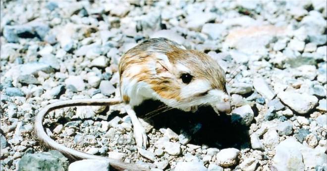 Vilka är alla djur som lever i öknen?