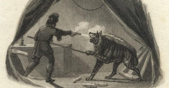 Vem skulle vinna en kamp wolf med rabies eller en Fläckig hyena?