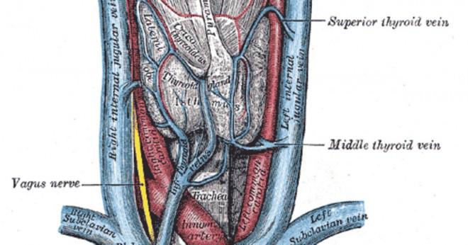 Vad är tortuosity av den fallande aorta?