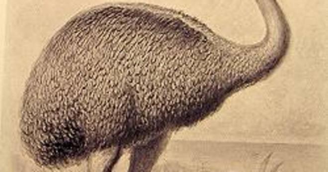 Är dodo-fågeln en strutsfågel?