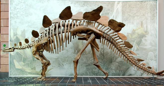 Dinosaurier levde i Filippinerna många år sedan?