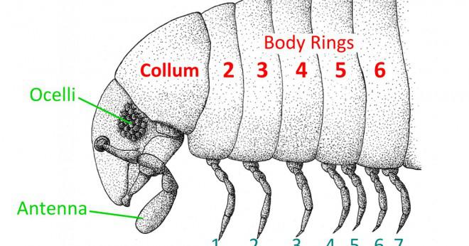 Vad är värre än en millipede med platta fötter?