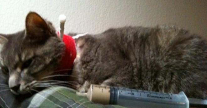 När slutar en katt leker med leksaker?