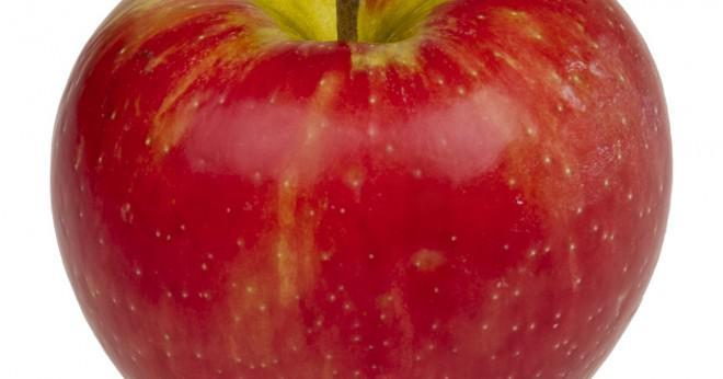 Har ett äpple från trädet celler?