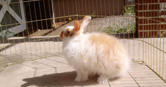 Finns det en skillnad mellan kaniner och kaniner?