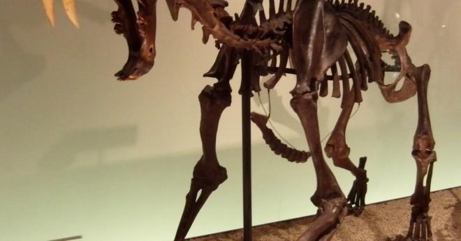 Vad kungariket var en saber - tandad tiger?