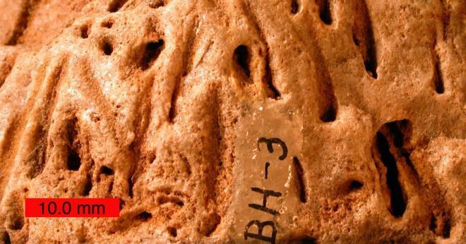 Är mögel och gjutna fossila samma sak?