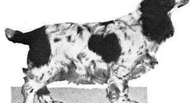 Hur mycket pengar har den Westminster hund show vinnare Vinn?