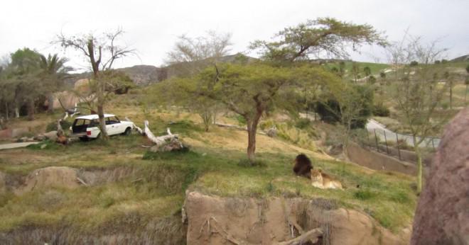 Där tror du att djuren kommer att vara glad zoo eller wildlife sanctuary?