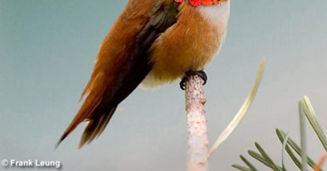 Vad kallas fåglar fötter?