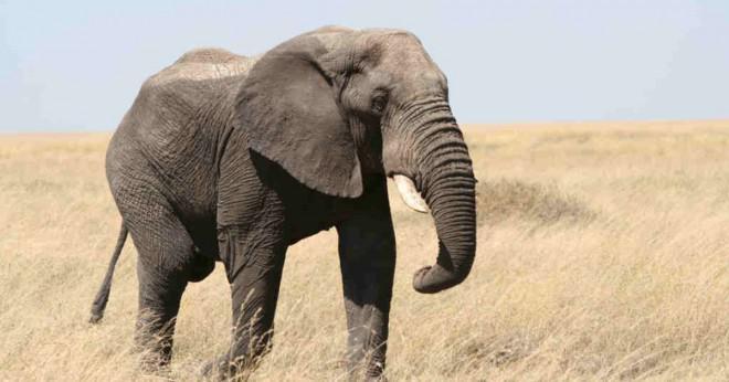 Djur som äter både växter och andra djur?