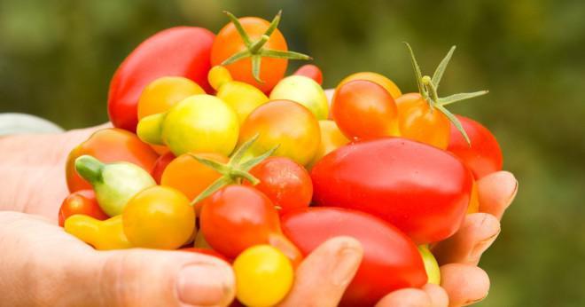 Vad använder gröna växter att göra mat?