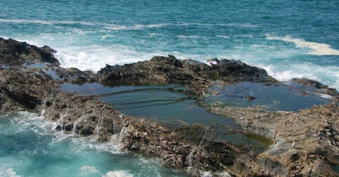 Vilka två egenskaper har djur som lever i tidvattenzonen zoner att hjälpa dem att överleva i sin miljö?